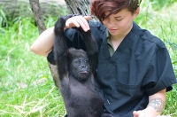 Grace Meloy trains Gladys, the baby gorilla at the Cincinnati Zoo.