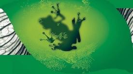 Frog foam inspires biofuel