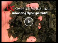 Advancing Algae's Potential